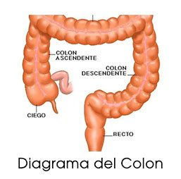 diagrama del colon